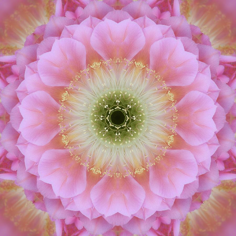 mandala cereus flower photography Janet Towbin