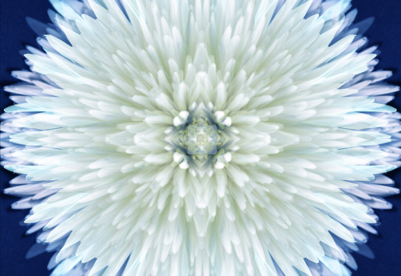Flower Mandalas II