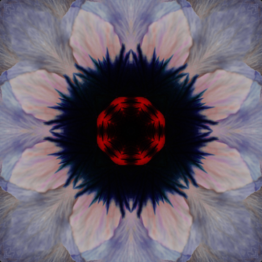 Pansy Mandala by Janet Towbin