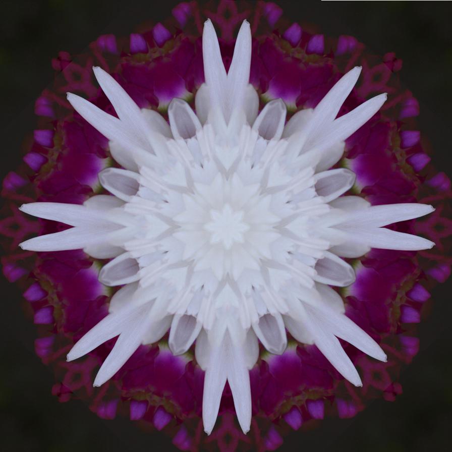 Spider Mum Mandala by Janet Towbin
