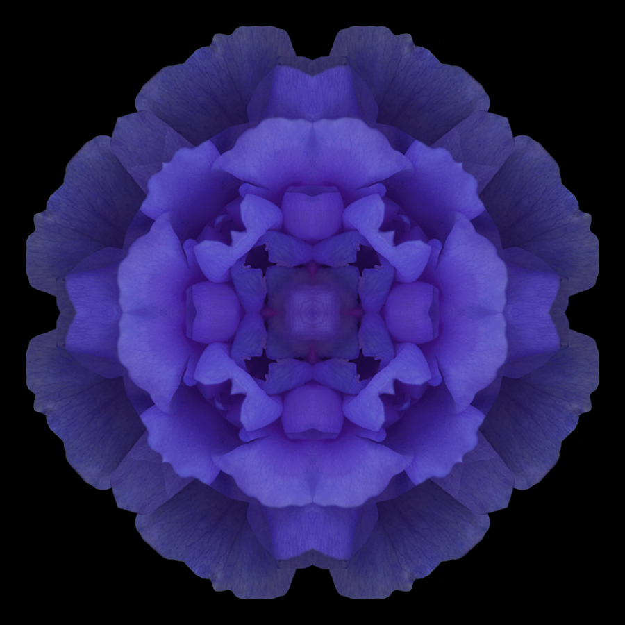 mandala crose flower photography Janet Towbin