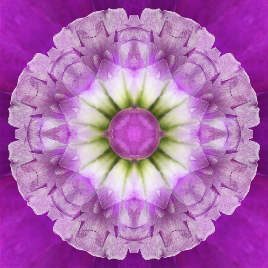 mandala orchid flower photography Janet Towbin