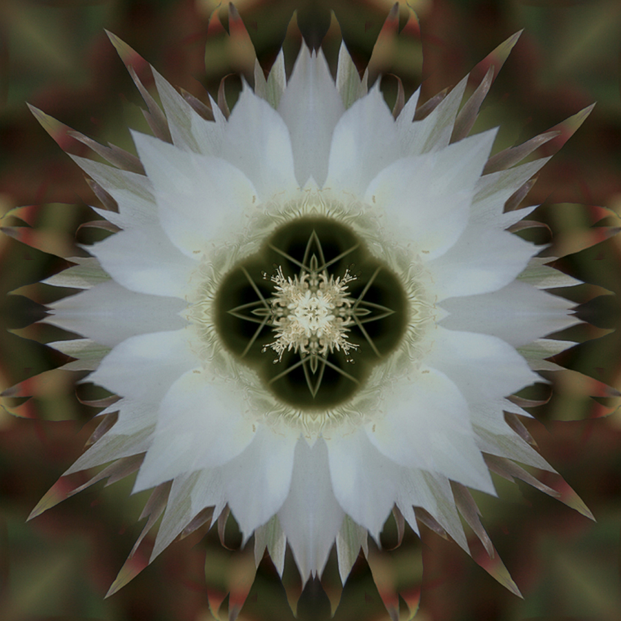 White Cereus Photography by Janet Towbin
