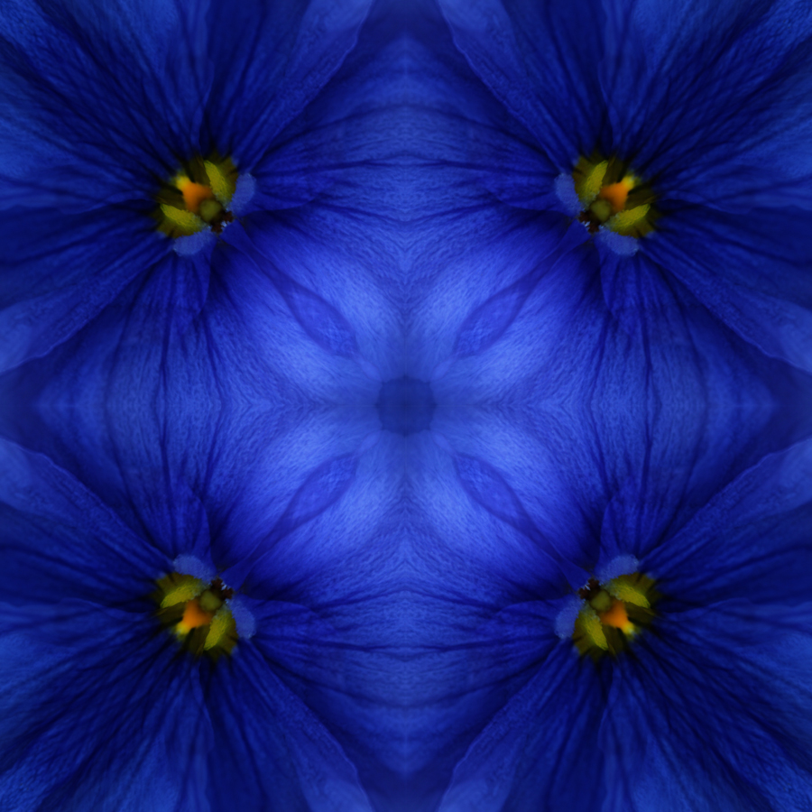 Pansy Square Blue by Janet Towbin